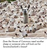Does the House of Commons need another sheep or someone who will look out for Toronto-Danforth's future?